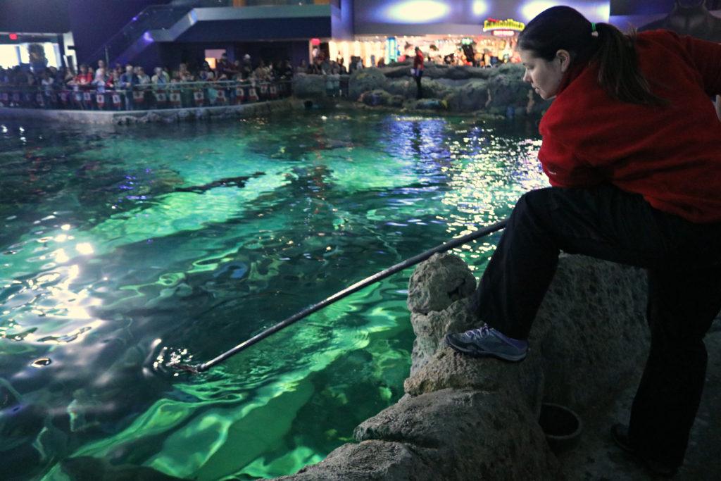 shark-feed-aquarist-maude