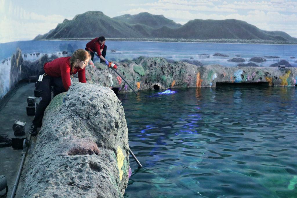 shark-feed-dangerous-lagoon-2