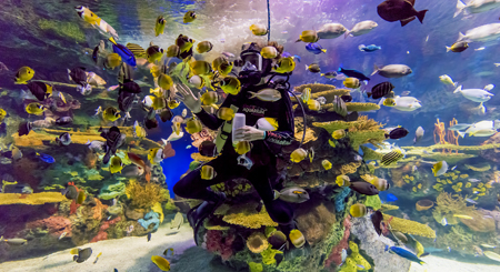 Dive Shows - Rainbow Reef