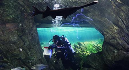 Dive Show at the Aquarium
