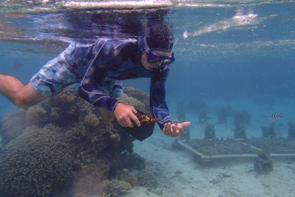 Fiji's Coral Coast