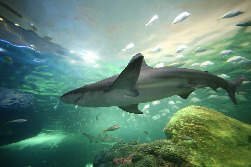 Sharks! At Ripley's Aquarium!