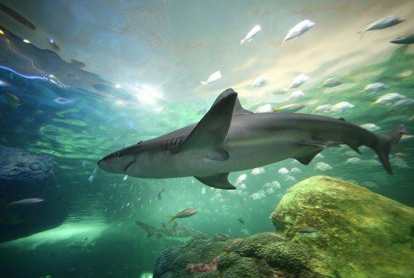 A sneak peek at the new Ripley's Aquarium.