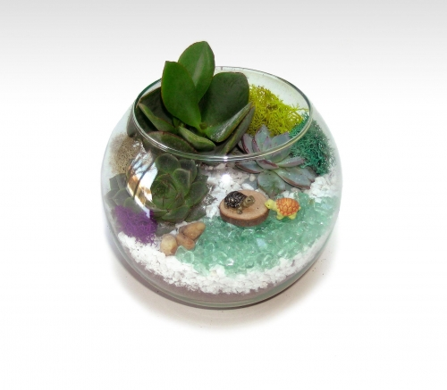 June Terrarium
