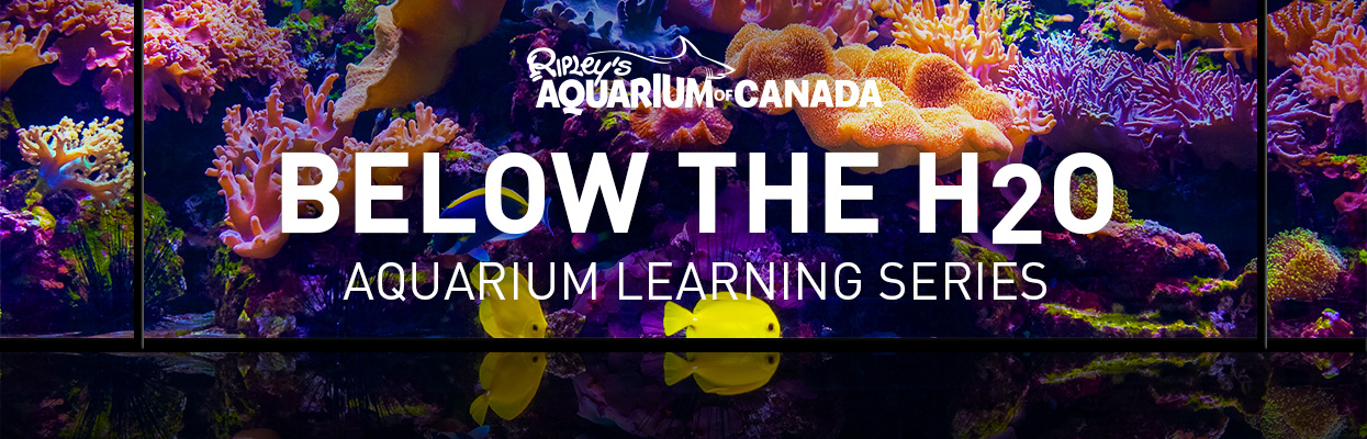 below the h2o learning series