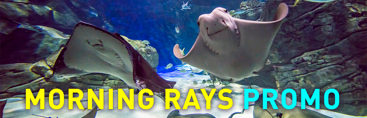 Morning-Rays-Graphic