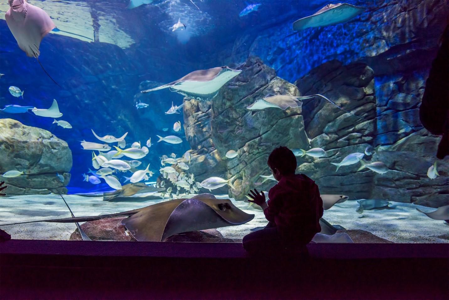 Raising a Marine Biologist