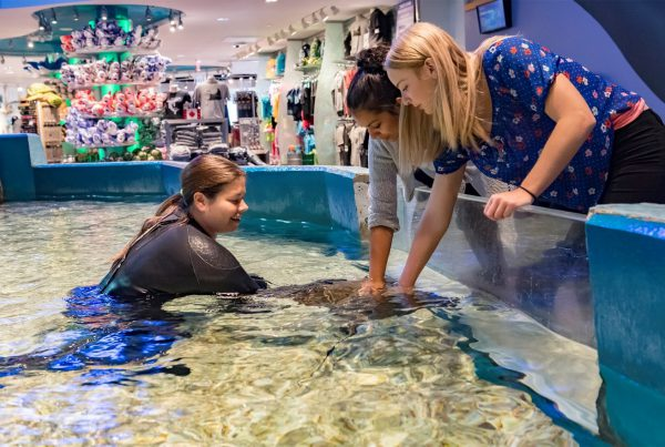 guests touching stingray