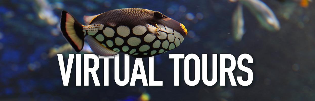 Ripley's Aquarium of Canada Virtual Tours
