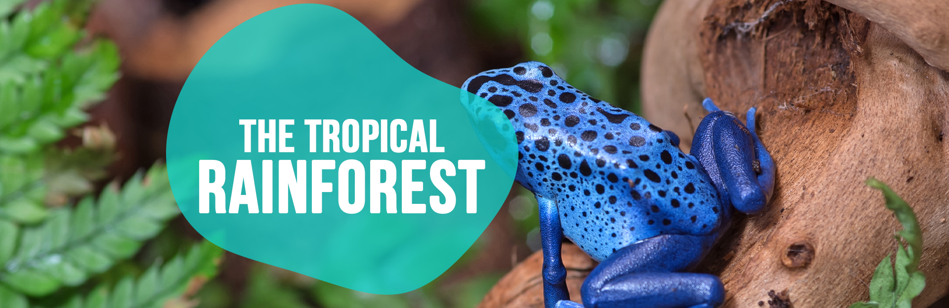 Header image for Tropical Rainforest page