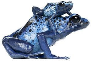double frog