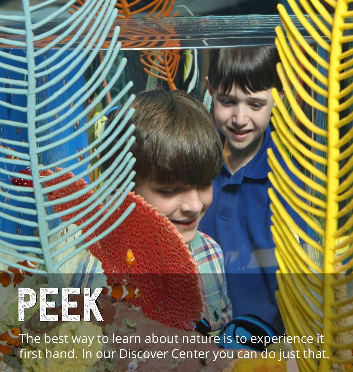 Discovery Center - Peek