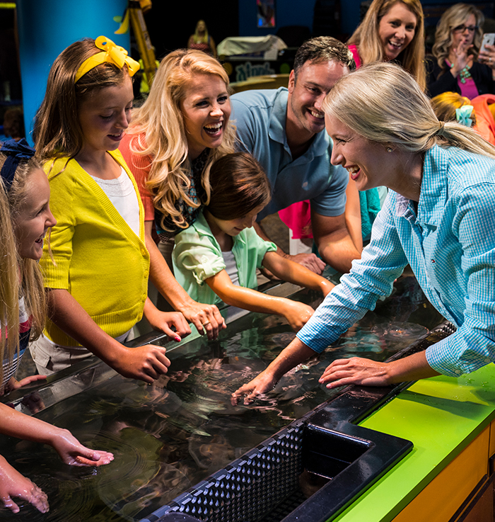 discovery center jellyfish touching