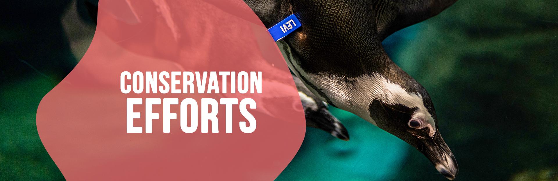Header Image for Conservation Page