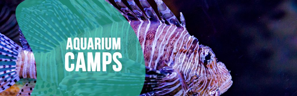 Header image for Aquarium Camps page
