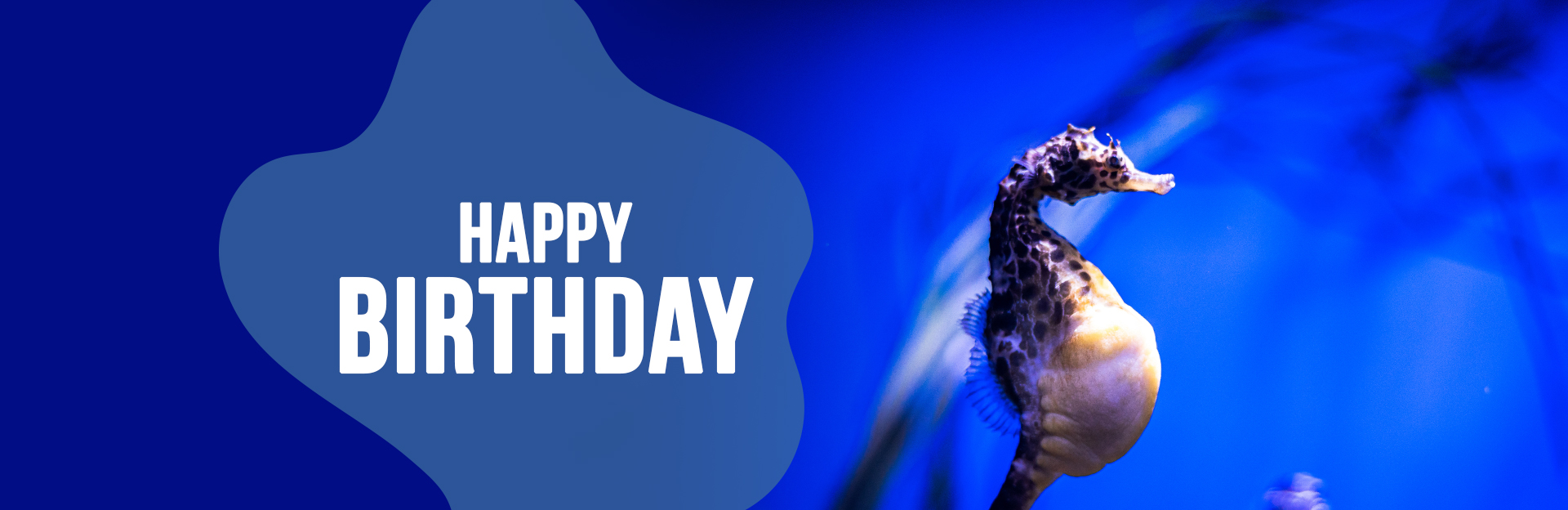 Header image for Birthday Parties page
