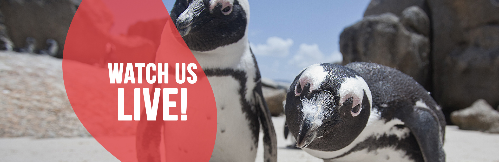 Header Image for Penguin Live Cam