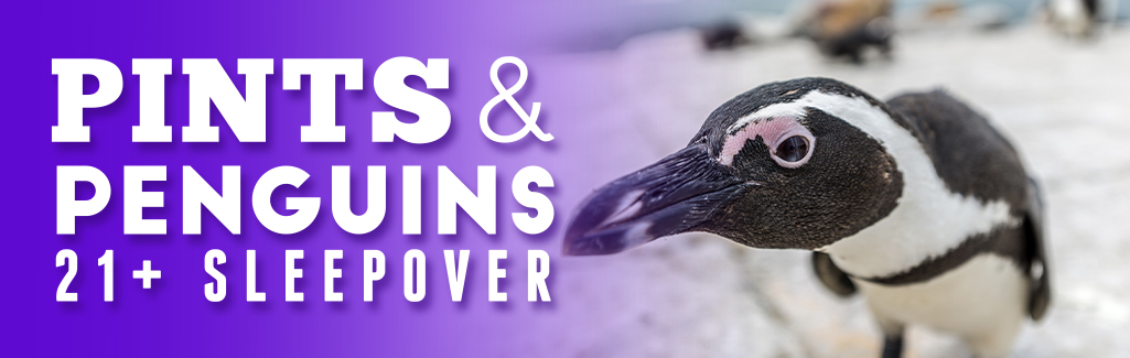 Pints & Penguins Sleepover Event