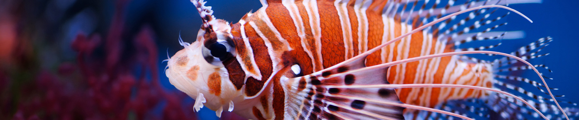 Image of a fish on the homepage