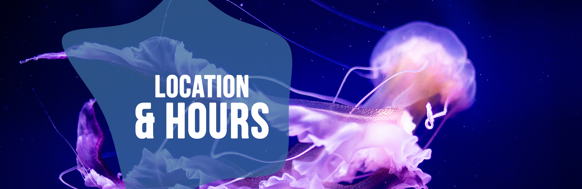 Header image for Location and Hours