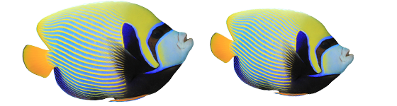 emporerrange fish