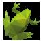 geo-frog
