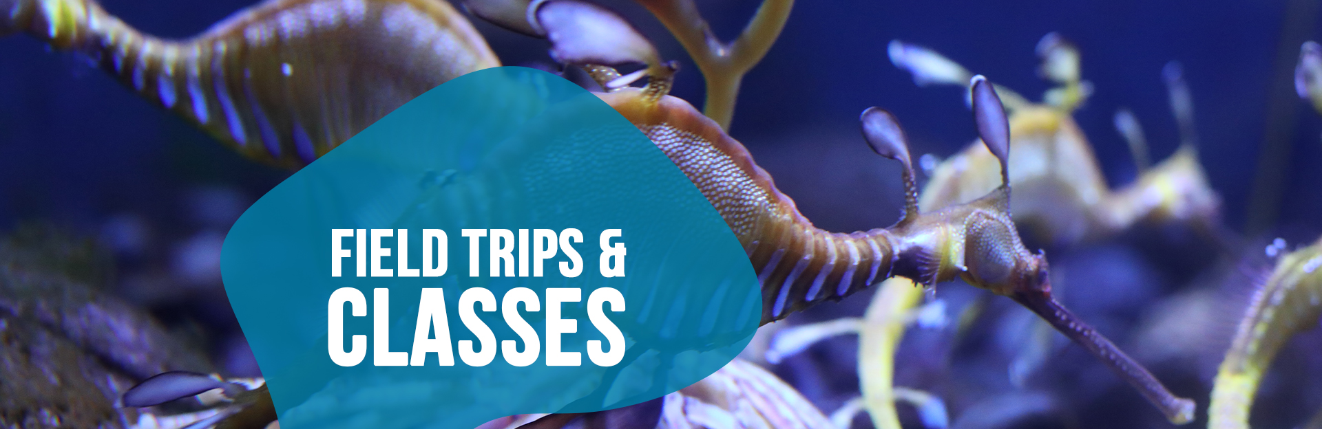 header image for field trips and classes