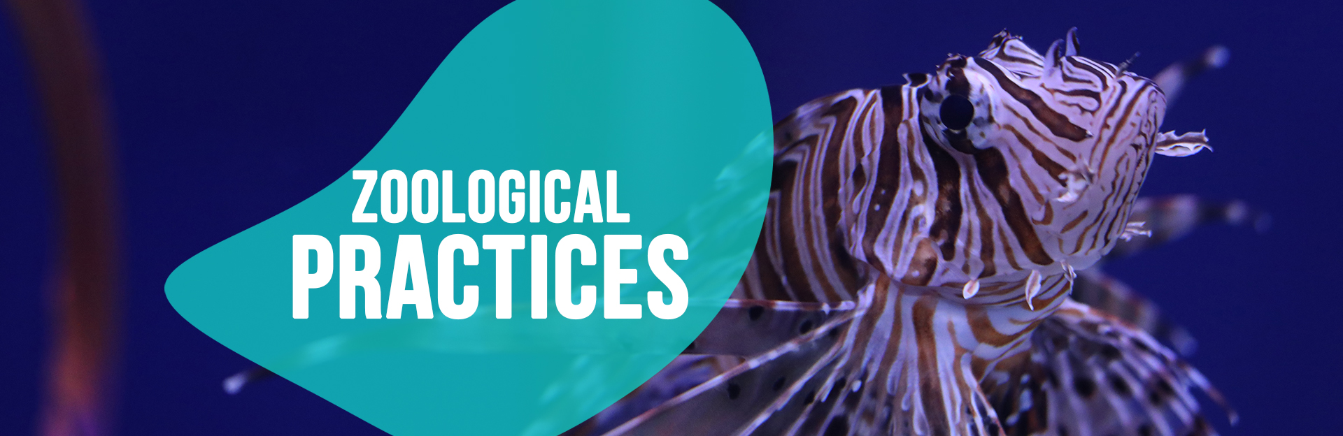 Header image for zoological Practices page