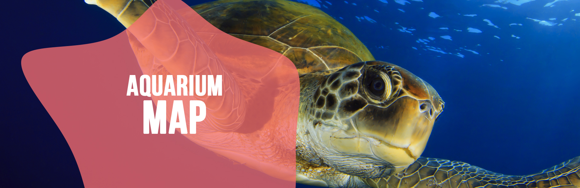 Header image for Aquarium Map