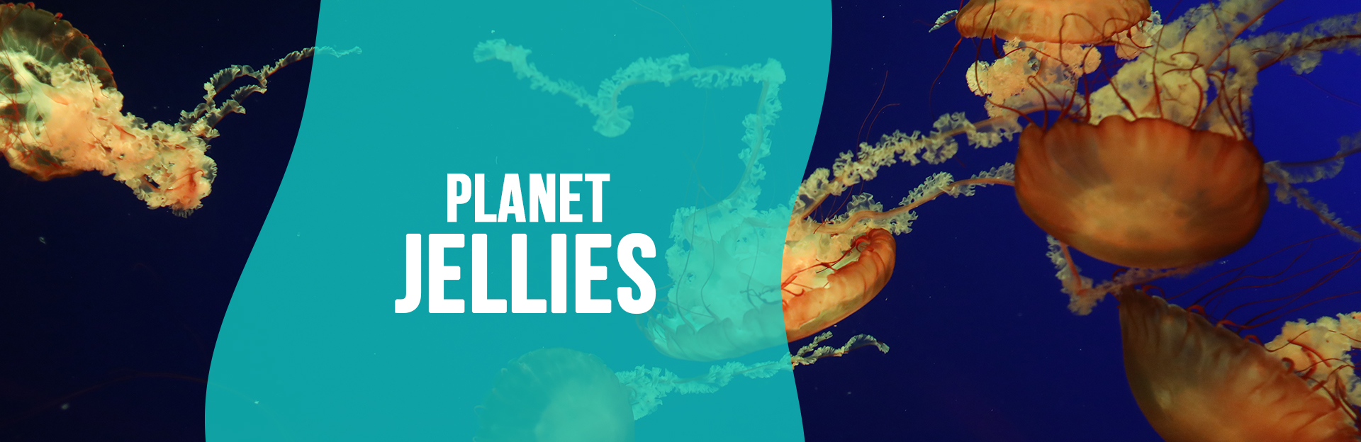 Header image for Planet Jellies page