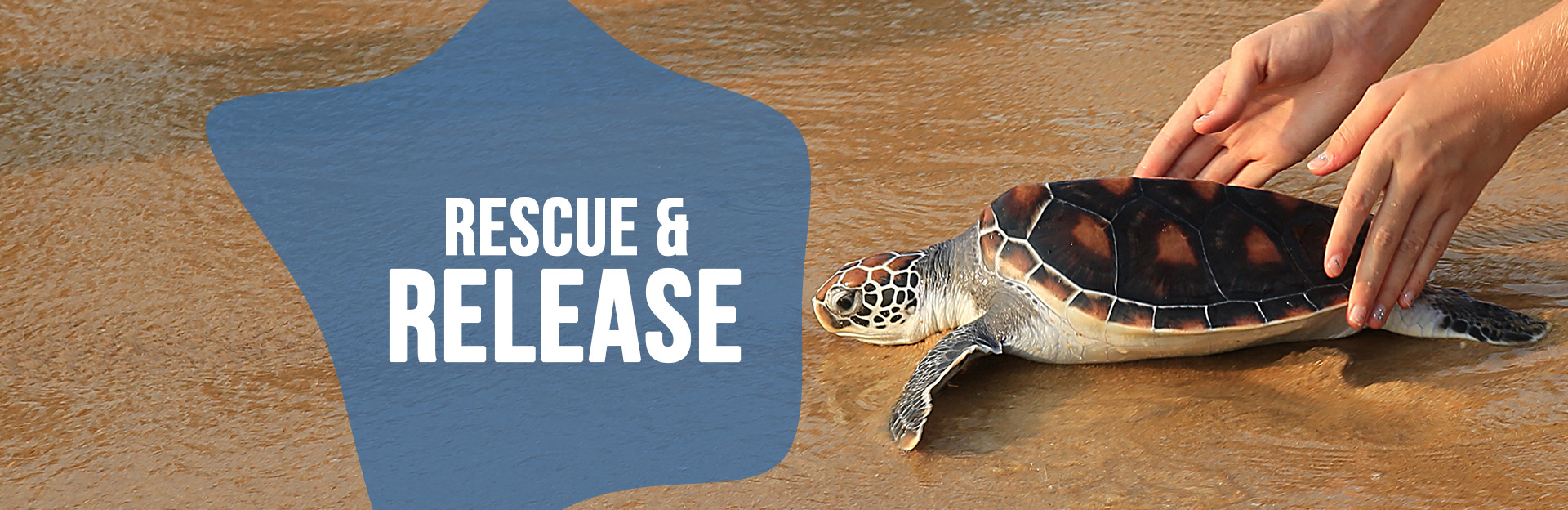 Header image for Sea Turtle Rescuse and Release