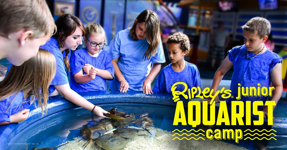 jr.aquarist camp