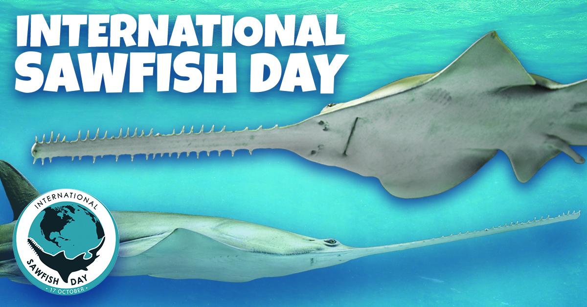 International Sawfish Day