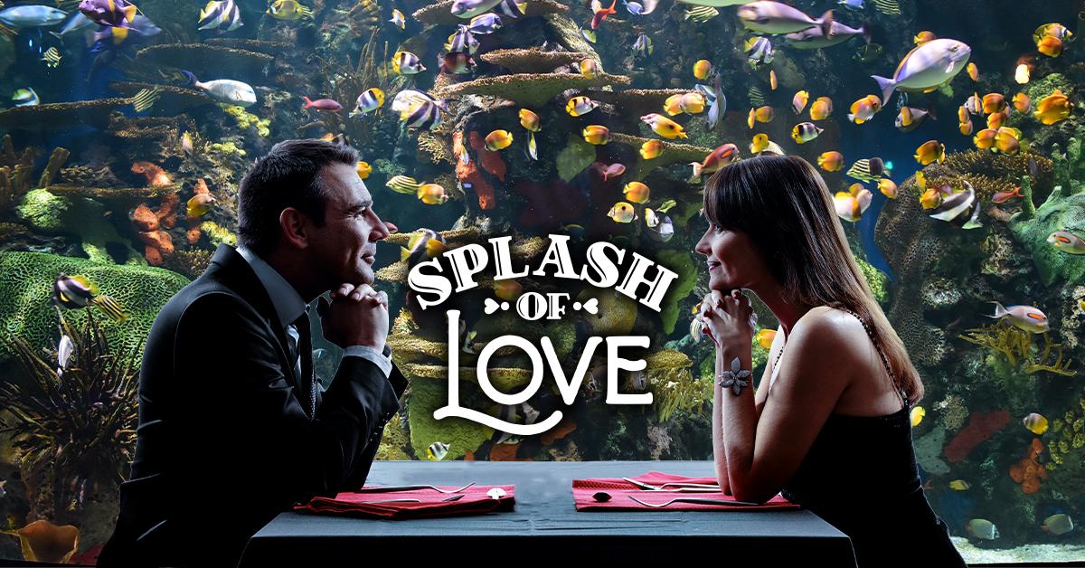 splash of love valentine's day event