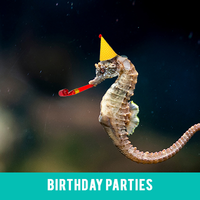Image for Birthday Parties