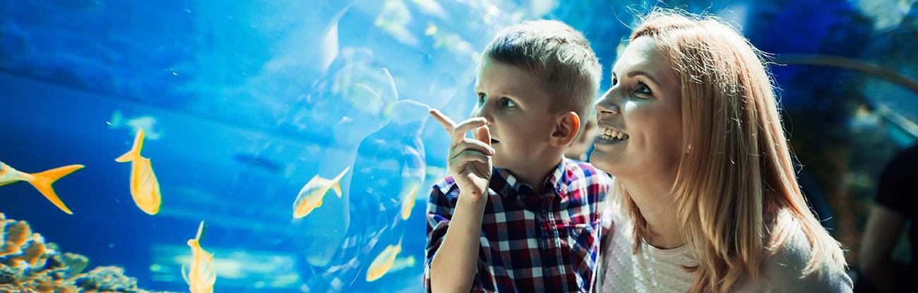 Ripley's Aquarium of Myrtle Beach - Virtual Birthday Parties