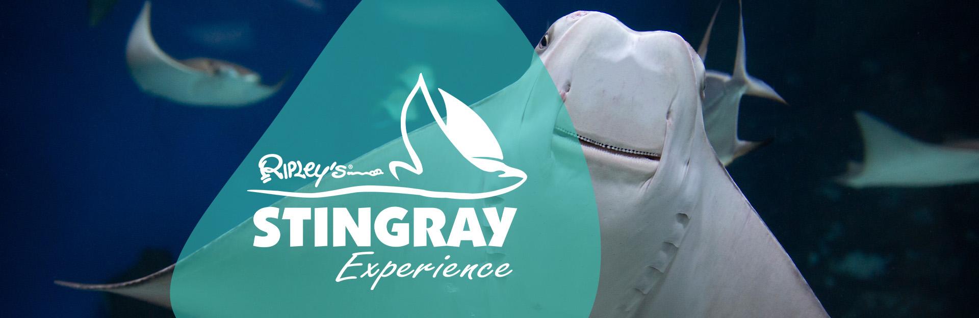 Stingray Experience image
