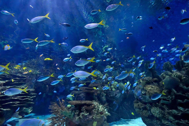 Ripley 39 S Aquariums Ripley 39 S Aquariums