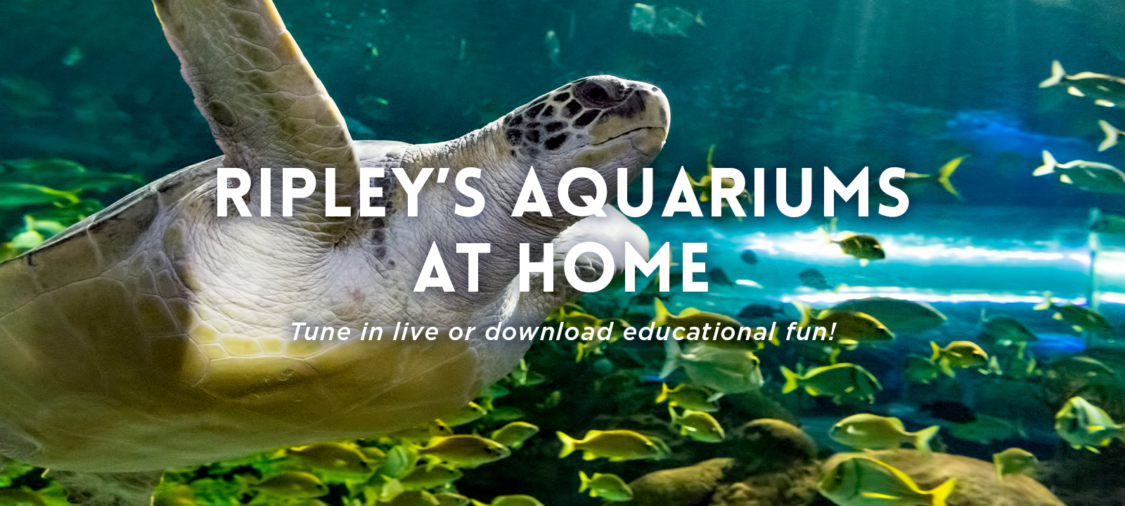 Ripley's Aquariums At Home Activities Banner