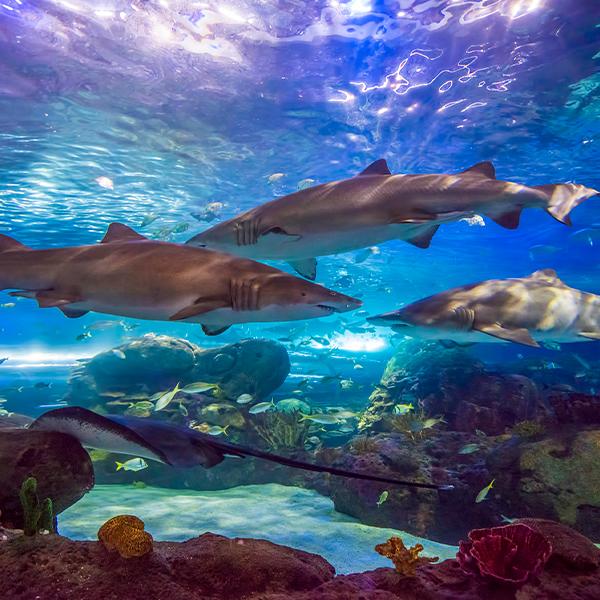 image of sharks swiming