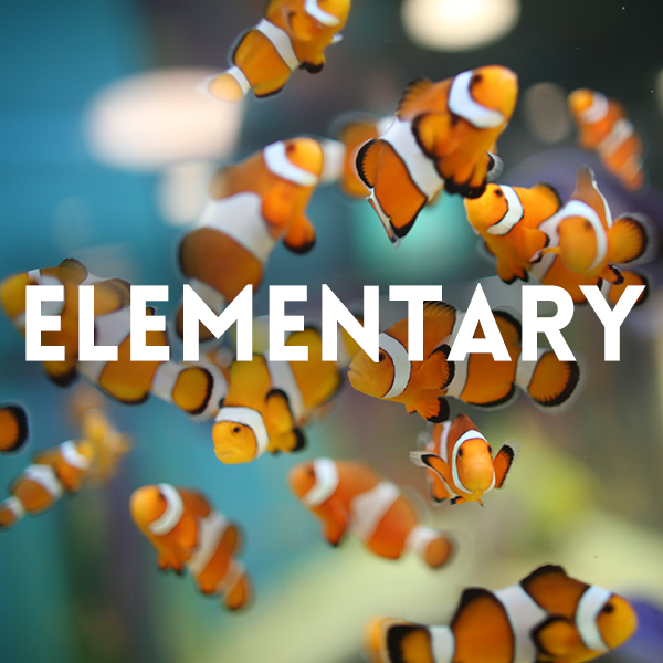 Image of fishes for elementary educational activity