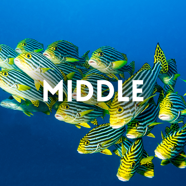 Image of fishes for middle educational activity