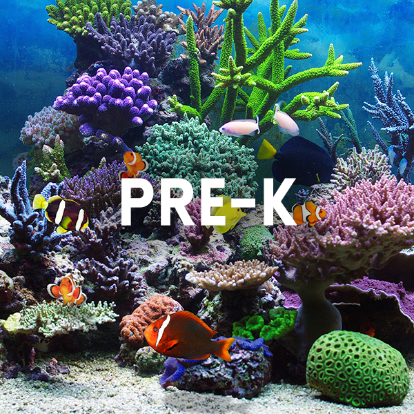 Image of fishes for pre-k educational activity